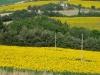 girasoli-e-grano-giugno-2012-12