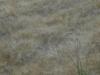girasoli-e-grano-giugno-2012-22
