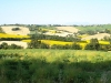 girasoli-e-grano-giugno-2012-8