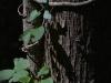 meditazione-contemplazione-silenzio-fonte-avellana26
