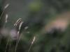 meditazione-contemplazione-silenzio-fonte-avellana40